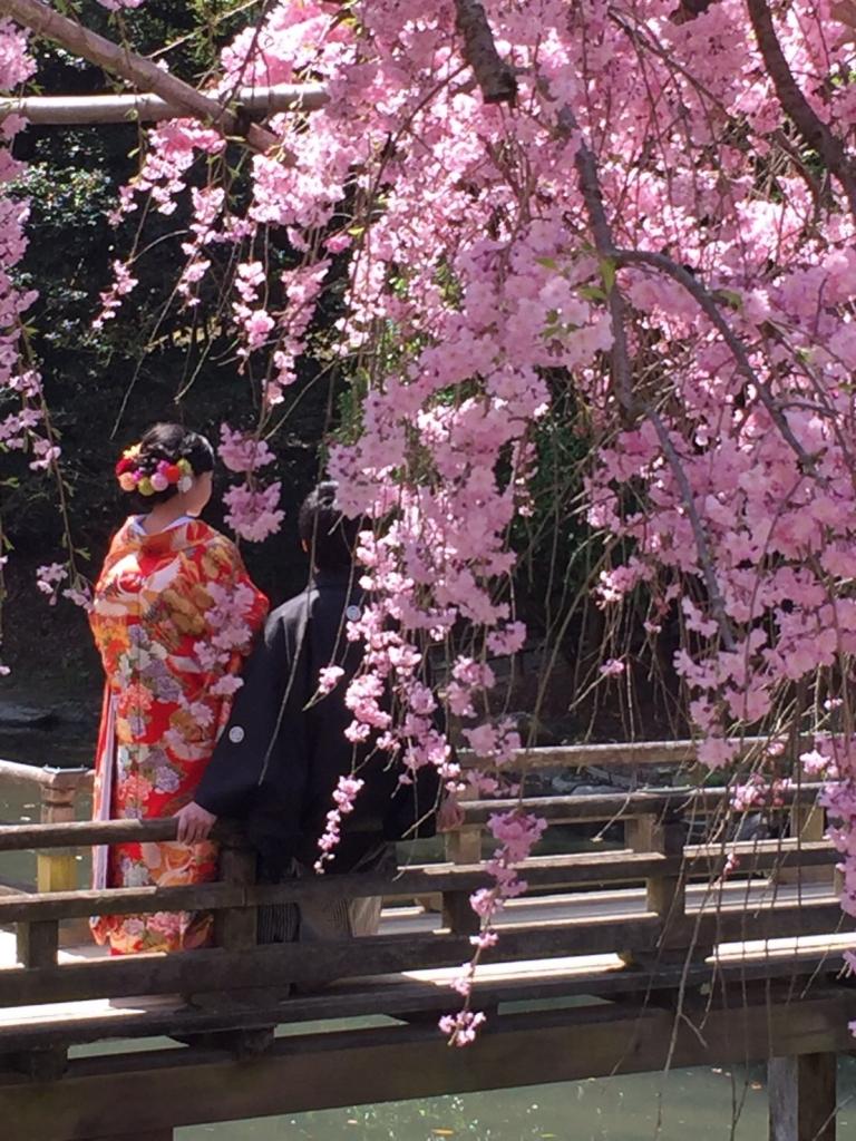前撮り…桜♡
